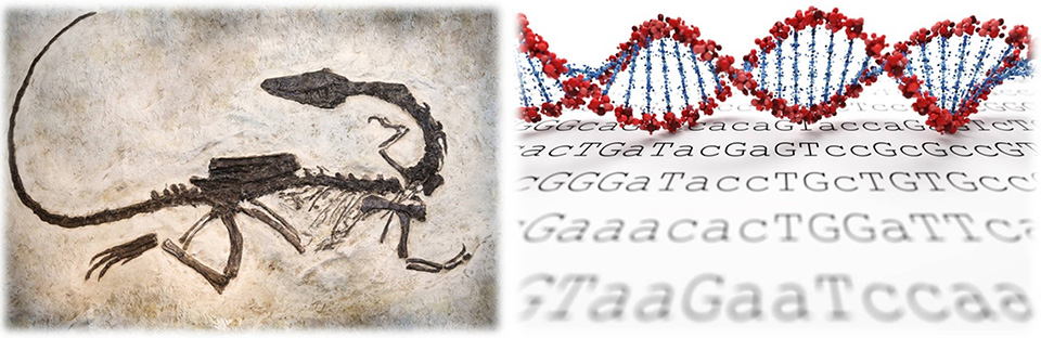 CEN4GEN paleogenomic services