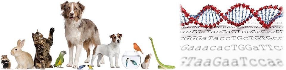 CEN4GEN veterinary genomic services