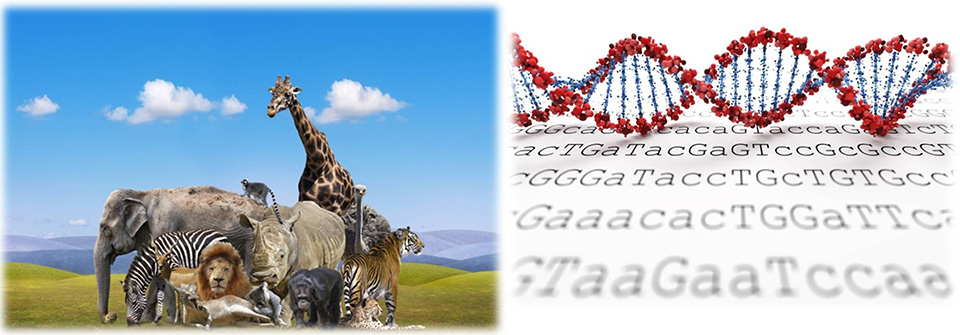 CEN4GEN wildlife and conservation genomic services